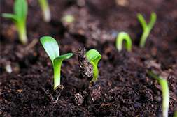 Благодаря Агропланту всхожесть растений возрастает до 80%