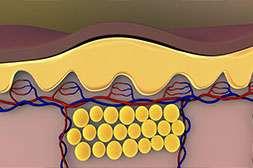 Кето Генетик устанавливает барьер образованию новых жировых клеток.