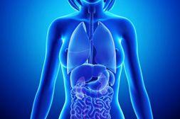 Gelminex обеспечивает регенерацию повреждённых глистами тканей.